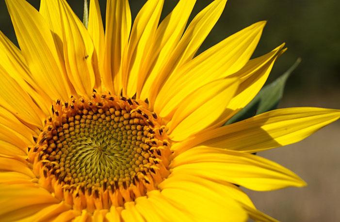 Amarillo significado Espiritual