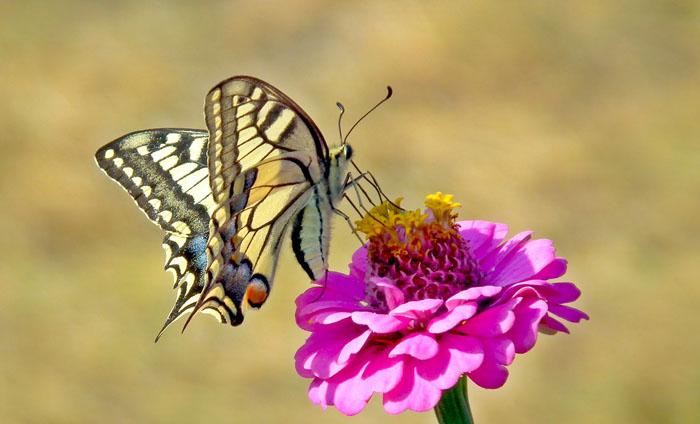 Mariposas significado Espiritual