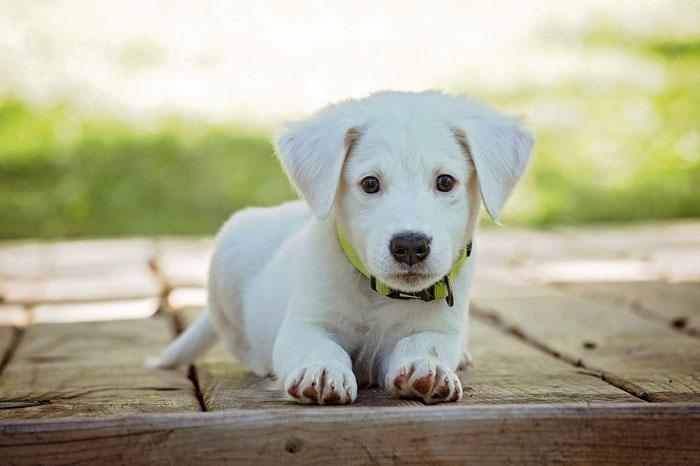 Comida holística para perros