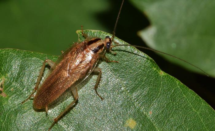 Cucarachas Significado Esotérico