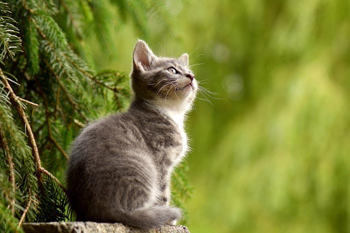 Gato significado espiritual