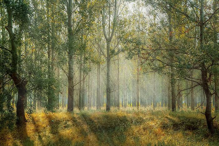 Frases Sobre árboles En Clinicaunrorg