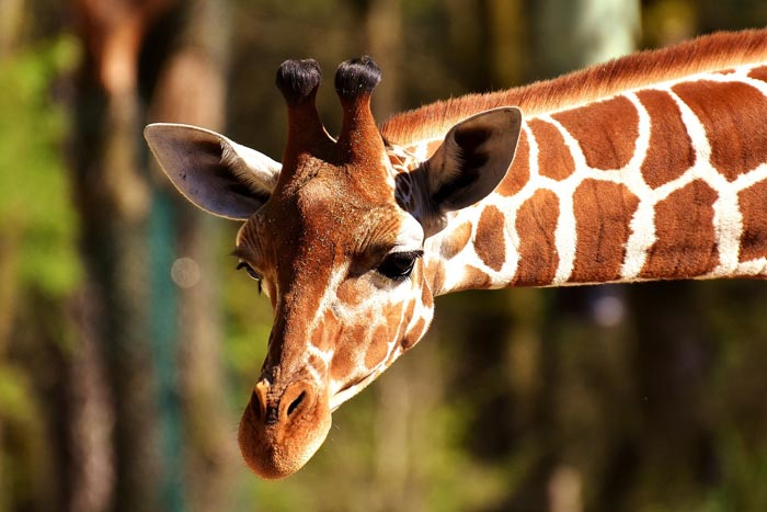 Noticias Curiosas Animales