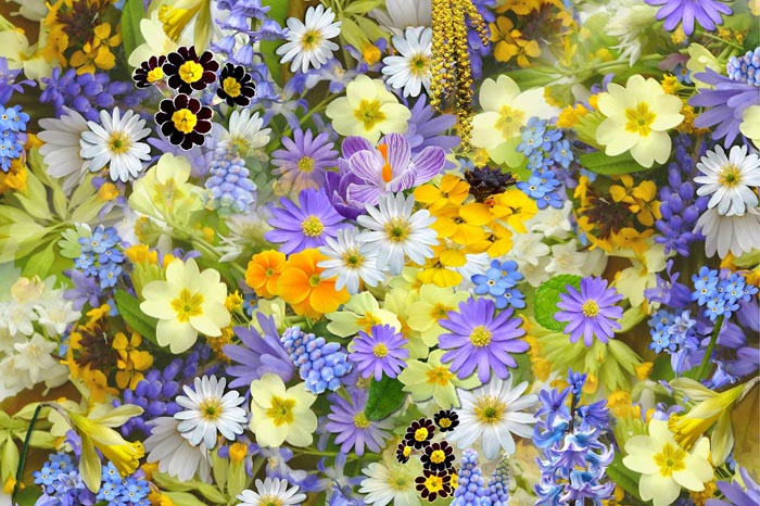 Significado De Soñar Con Flores Verlo Gratis