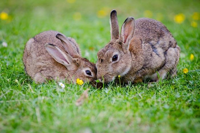 El significado de Soñar con Conejos