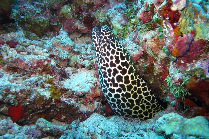 Beneficios del suero de anguila