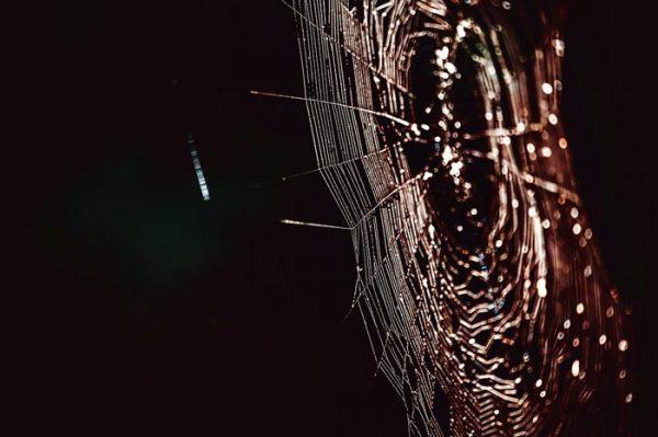 ¿Cuál es el Significado de Soñar con Arañas?