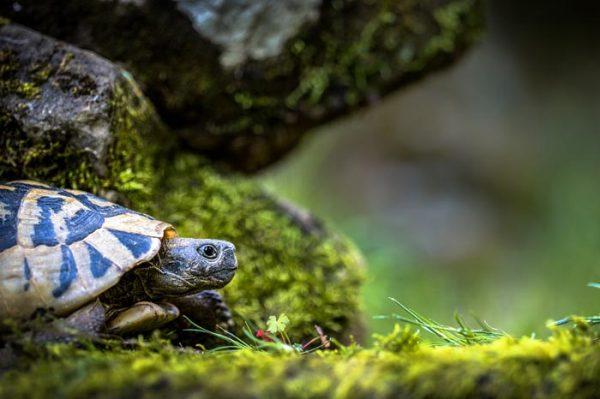 ¿Cuál es el significado de Soñar con Tortugas?
