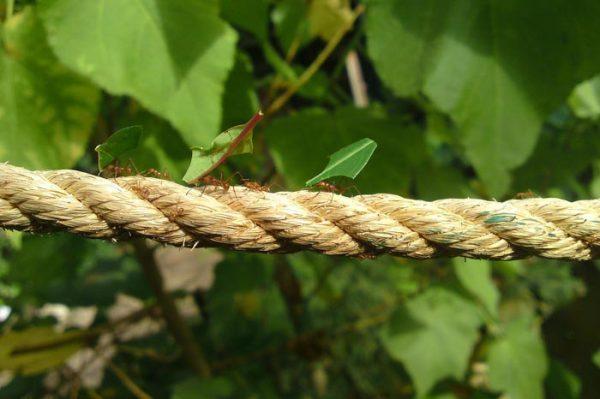 ¿Qué Significa Soñar con Hormigas?