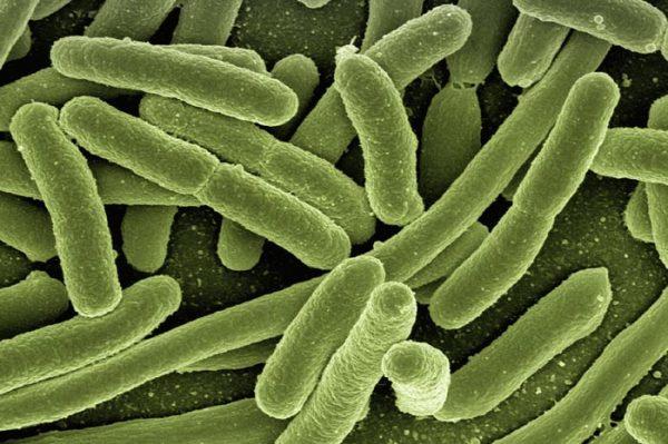 Bacteria helicobacter pylori: Síntomas