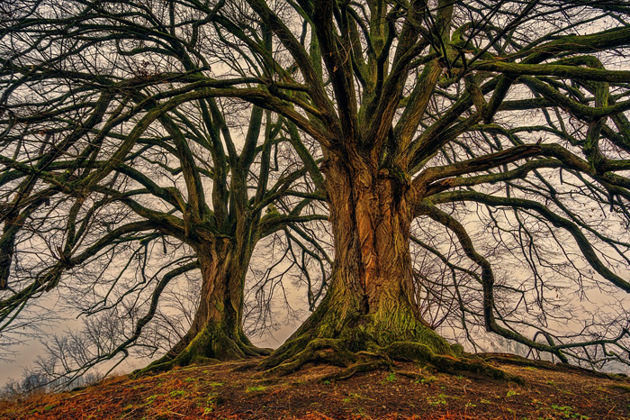 Qué es el árbol sefirotico